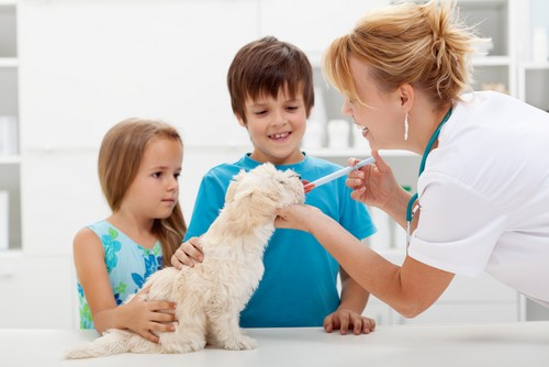 Veterinarian in Mission Viejo, CA - Vaccinations